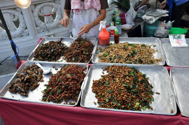 thailand-bugs